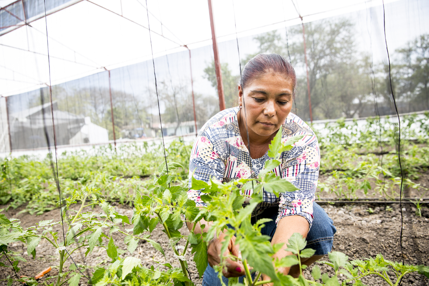 Emma Maria Guadarrama, a client of CrediConfia, can invest in farming methods that extend past the traditional harvest season.