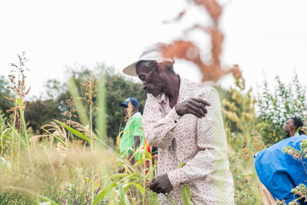 Festus harvesting his crops