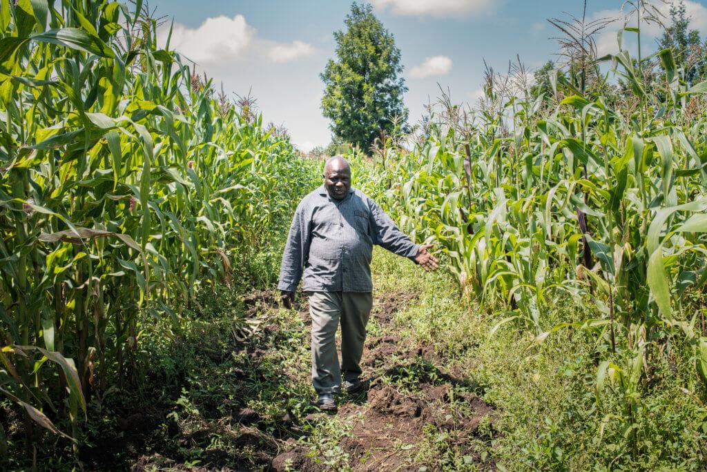 Alfred in maize field